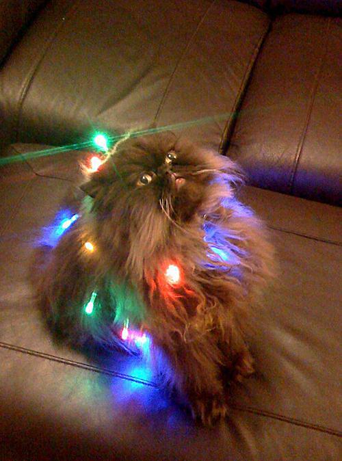Но кот всяко красивее, правда же?