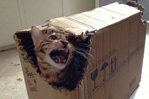 Кот Шредингера возражает против бесчеловечных ... стоп, бескотовечных экспериментов!