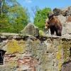 Калининградский зоопарк — Königsberger Tiergarten