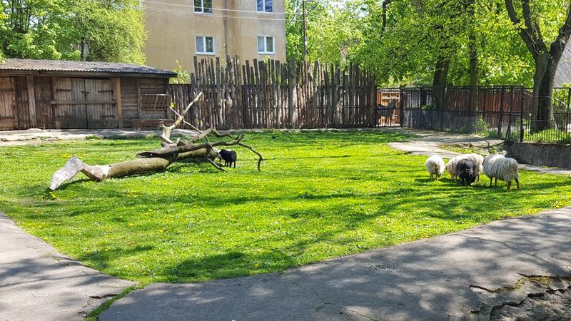 10_zoo