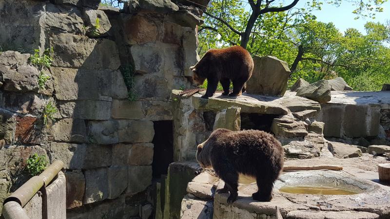 12_zoo