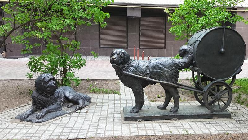 5_dog