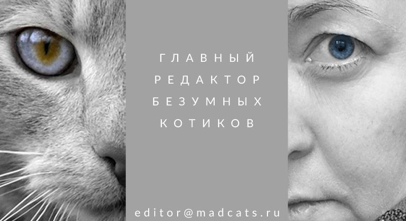 editor800