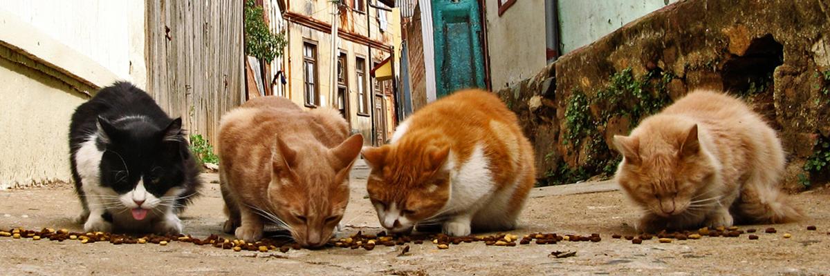 Street_cats_(1)