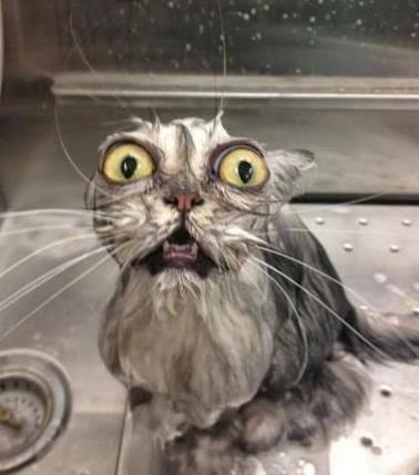 бедный-котик