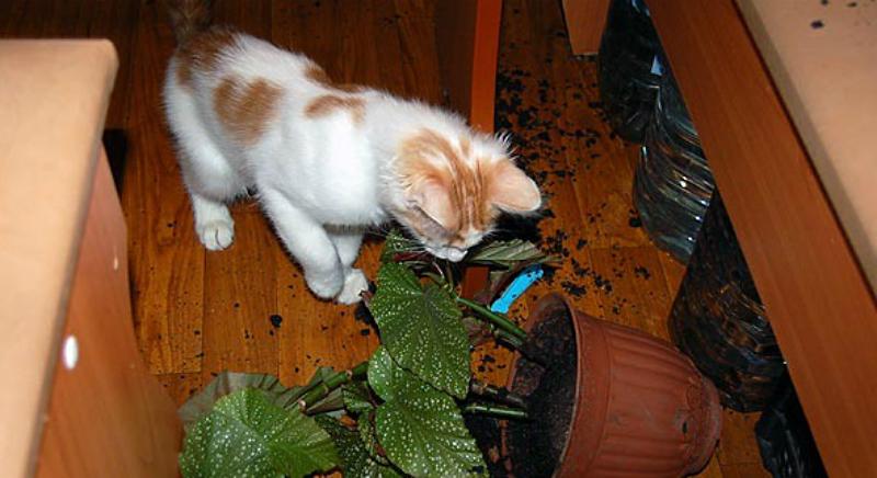 Кот и горшок с цветком
