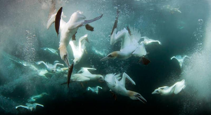 Птицы ловят рыбу в воде