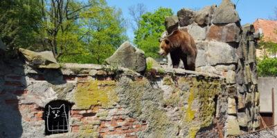 Медведь на кирпичной стене