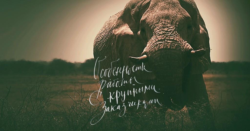 Слон, надпись