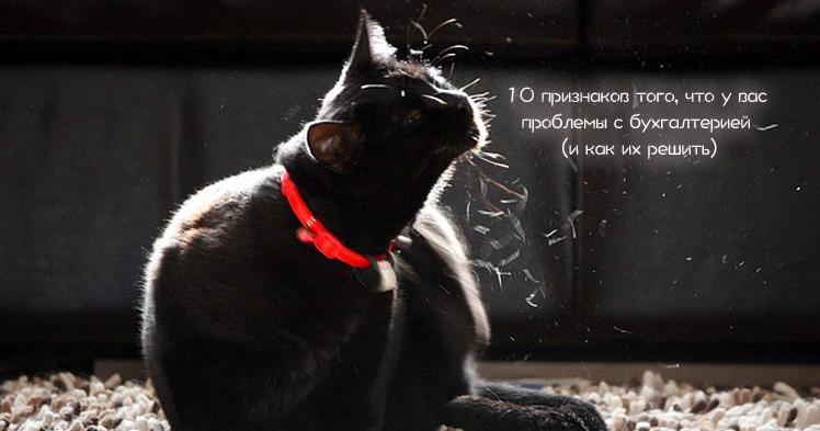 Черный кот в красном ошейнике, надпись