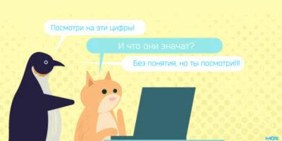Кот за ноутбуком и пингвин