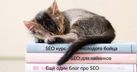 Спящий на книгах котенок