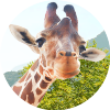 Giraff.io