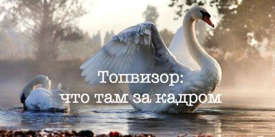 swan-800