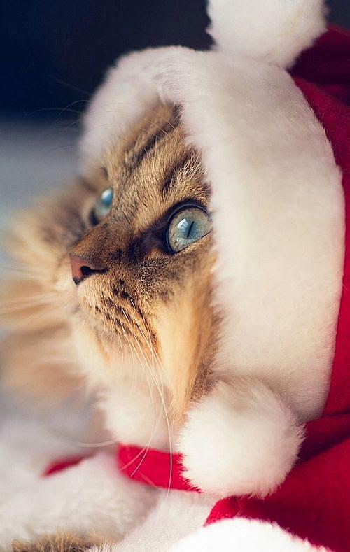 Мы верим в Деда мороза, а ты?