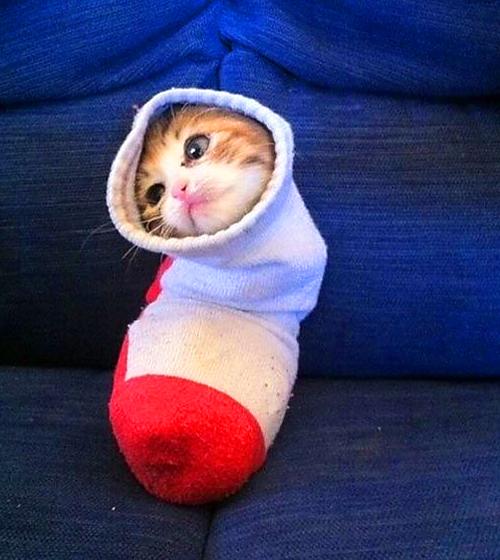 В носочке на Рождество вы найдете меня. Скоро там 25 декабря?