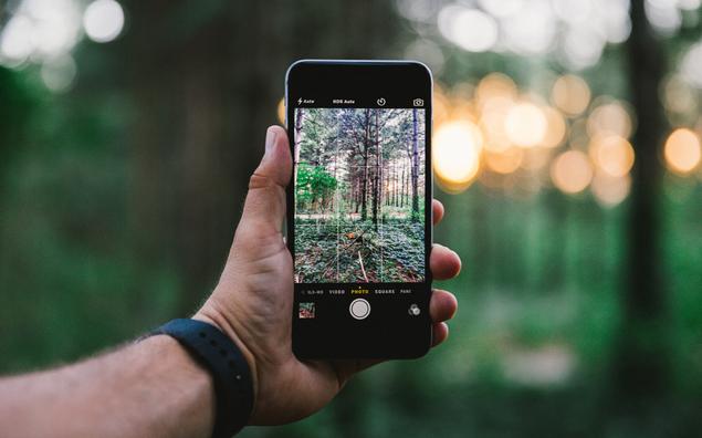 Смартфон в руке фотографирует лес