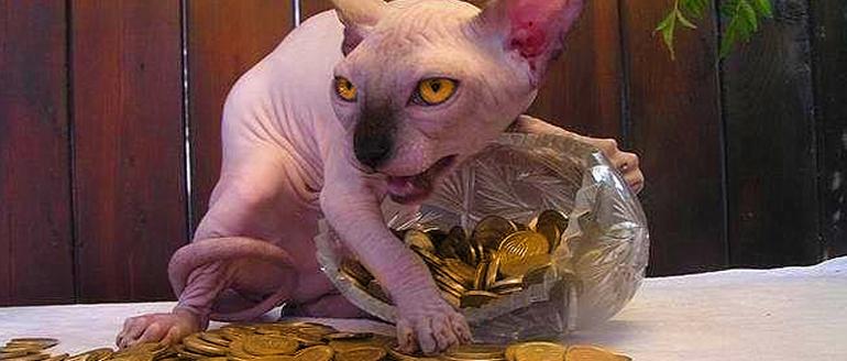 Сфинкс с монетами