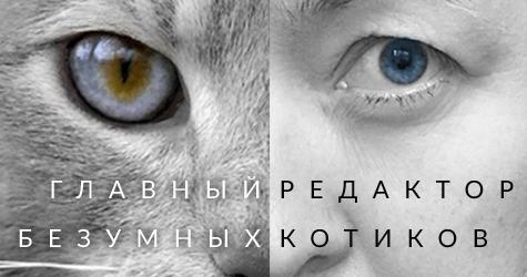 Коллаж кот и человек