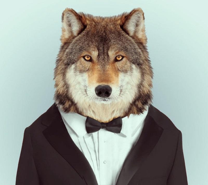 Волк во фраке